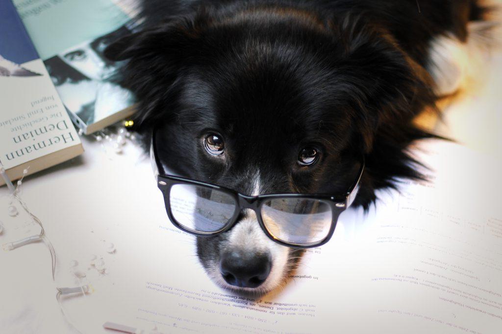 Studium Hund